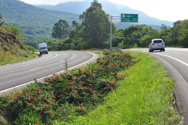 135871-rodovia-federal-usara-vegetacao-como-sinalizacao